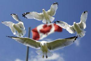 dolar kanadyjski a wojny handlowe