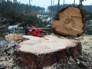 Kiedy najlepiej przeprowadzić wycinkę drzewa?