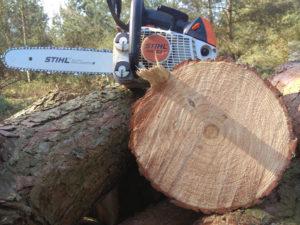 wycinka i usuwanie drzew